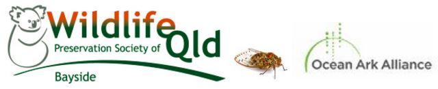 bb oaa cicada logo banner