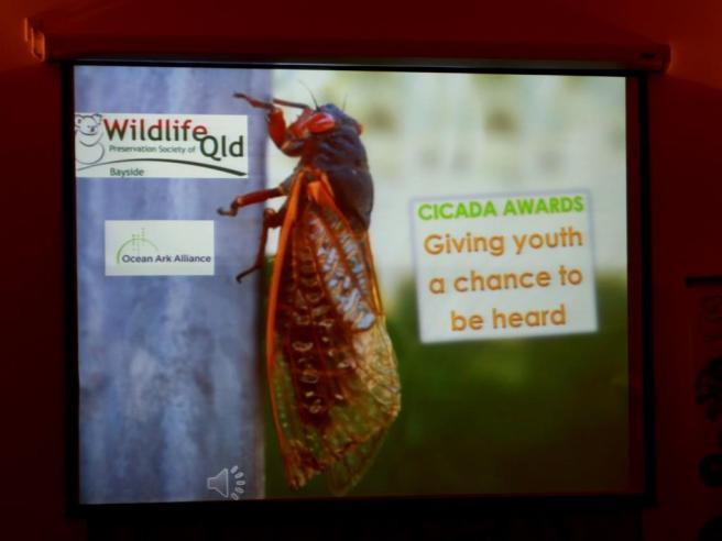 022 Cicada Awards screen 4 December 2015 comp